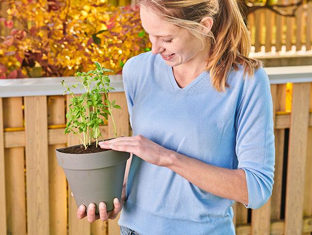 Set me 4 vazo Grow